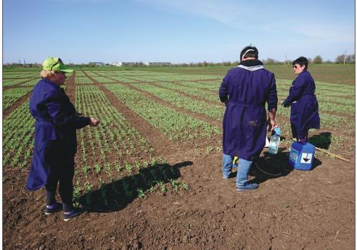 """Эффективность применения жидкого органического удобрения """"СанаМикс"""" на горохе в условияъ"""